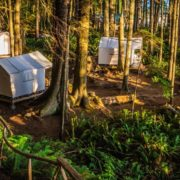 orca-camp-1143-wilderness-safari-tents
