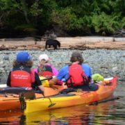 orca-camp-1344-kayakers-float-by-bear-on-beach-Julie