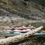 whales-wildlife-wilderness-kayaking- (5) trips
